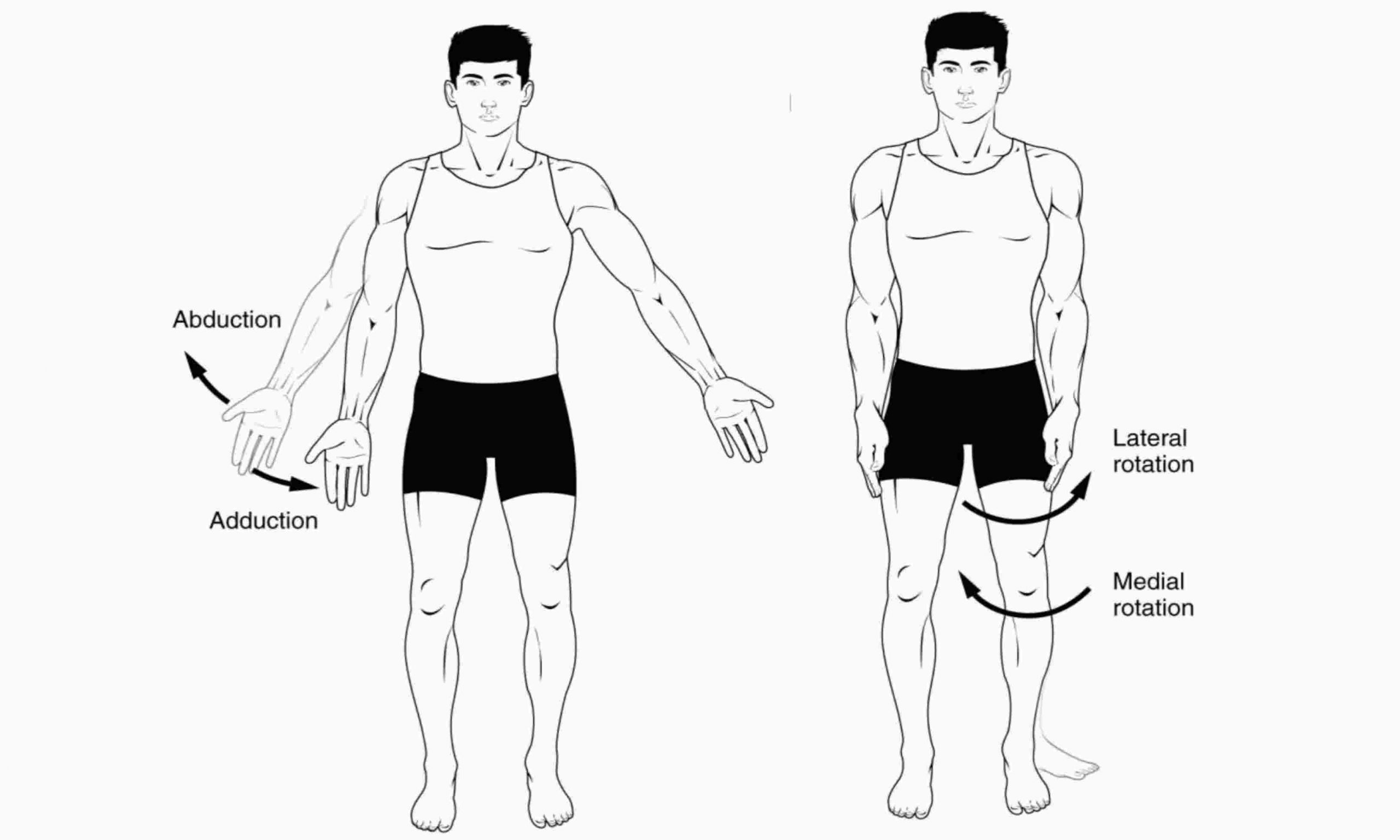 Difference between medial rotation and pronation